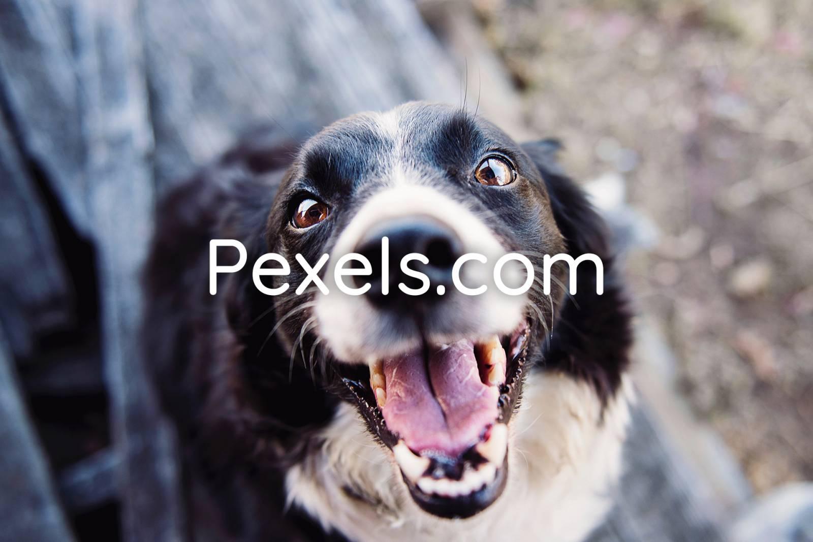 pexels gratis stockfoto's